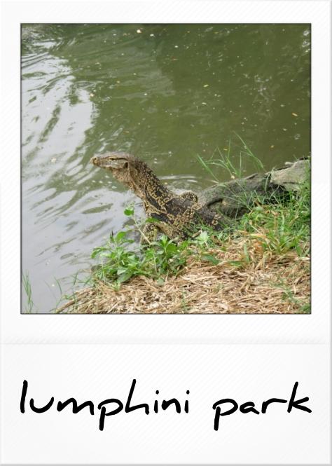 lagarto-1