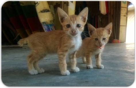 Miren la cola de los gatos!!!