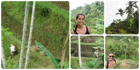 Terrazas de arroz - Ubud